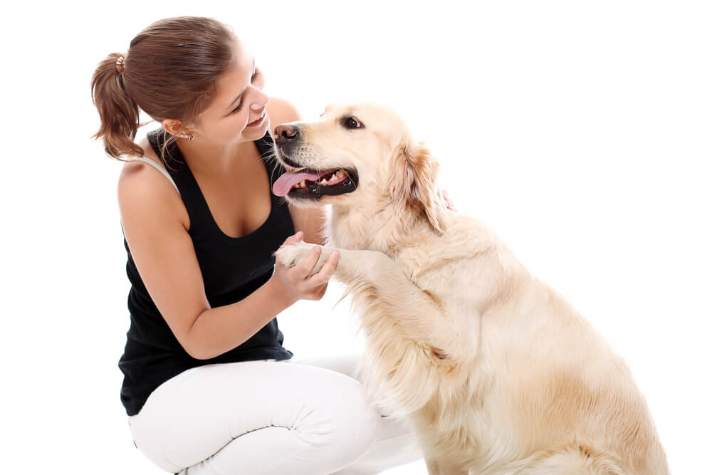 dog trainer, dog behaviourist, dog training, home dog training
