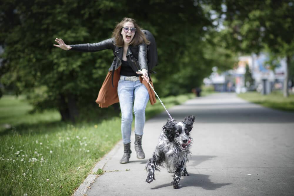 dog trainer, dog behaviourist, dog training, home dog training